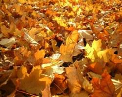 Почему листья желтеют? - Хочу всё знать