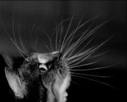 Зачем кошке нужны усы? - Хочу всё знать