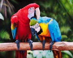 Почему попугаи умеют разговаривать? - Хочу всё знать